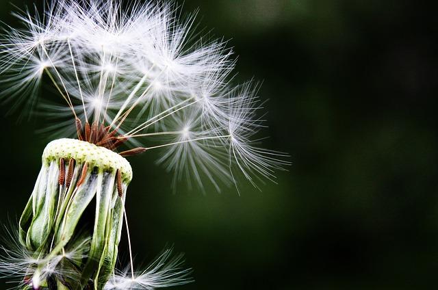 Inicio de una nueva forma de vivir: Mindfulness