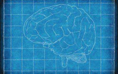 Mindfulness cambia el cerebro