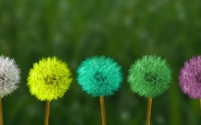¿Por qué Mindfulness?