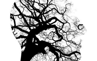 Mindfulness y neurobiología: los cambios estructurales