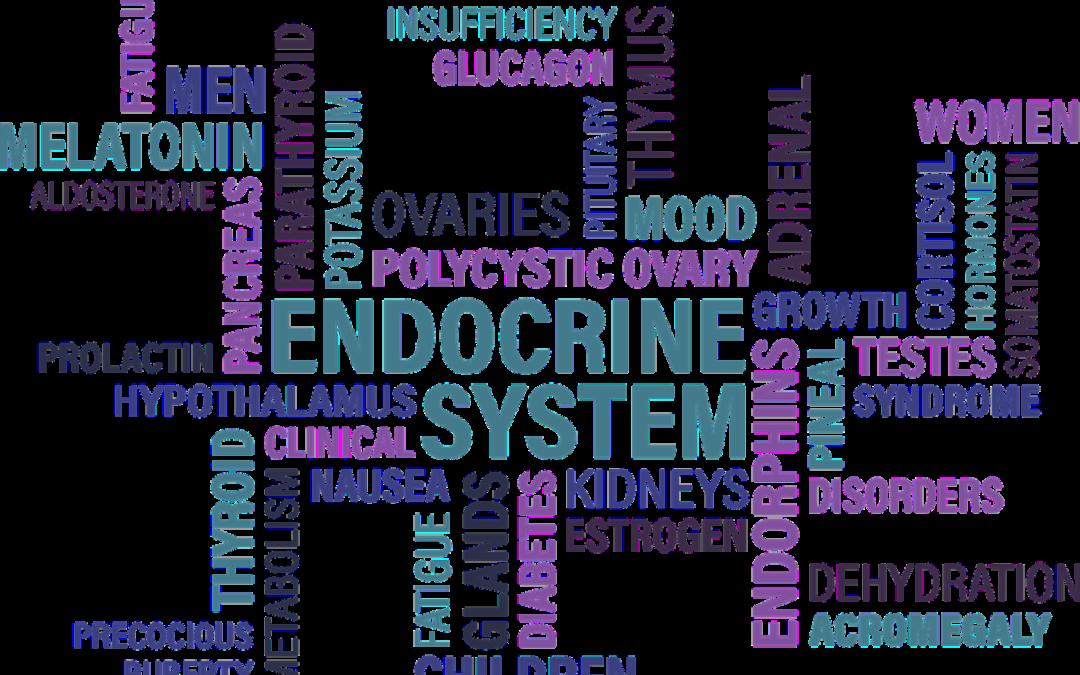 ¿Cuáles son los cambios endocrinológicos que produce el Mindfulness?